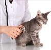 Ветеринарные клиники в Таштыпе